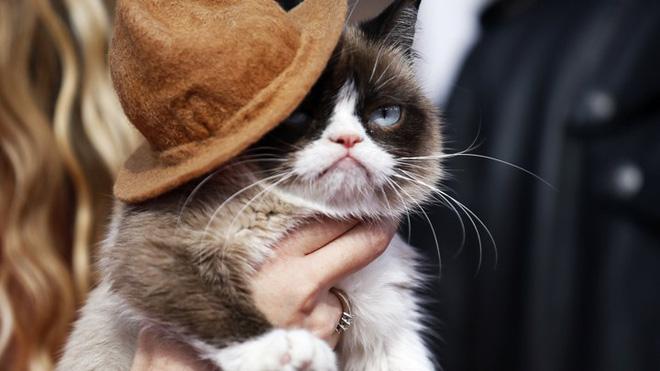 Grumpy Cat - chú mèo cáu kỉnh nhất thế giới với hơn 8 triệu người theo dõi đã qua đời