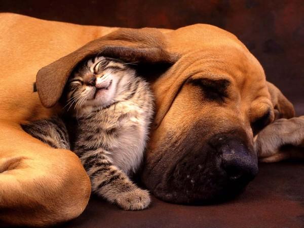 Chó hay mèo loài nào thông minh hơn