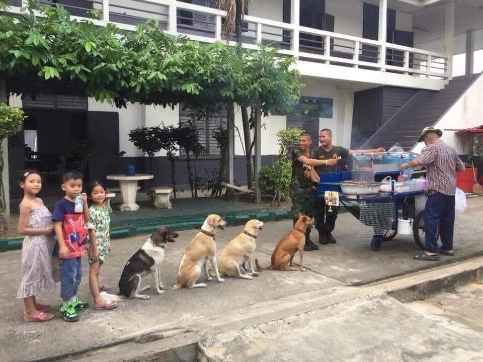 Góc ý thức: 4 chú chó xếp hàng nghiêm chỉnh chờ đến lượt