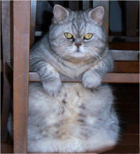Cùng chiêm ngưỡng chú mèo mũm mĩm