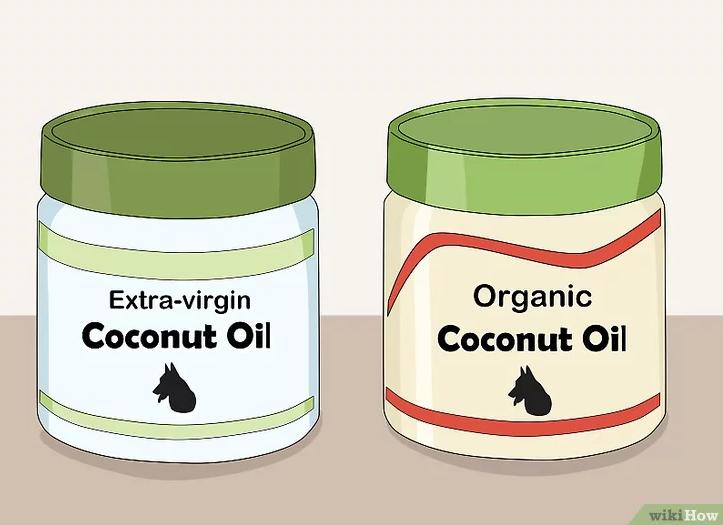 Cách sử dụng dầu dừa trị bọ chét trên da chó