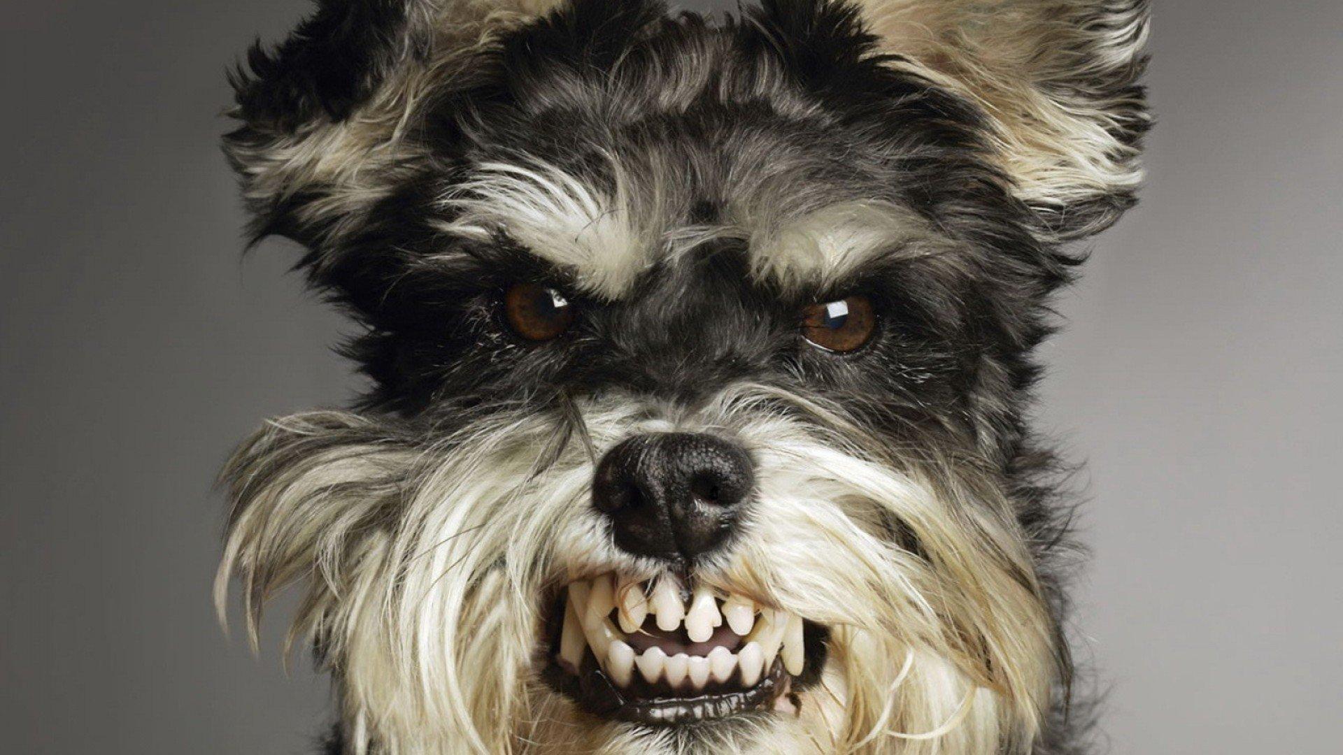 Không nên làm 5 điều này đối với chó cưng