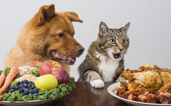 Chất béo và dầu: Tốt hay xấu cho sức khỏe chó?