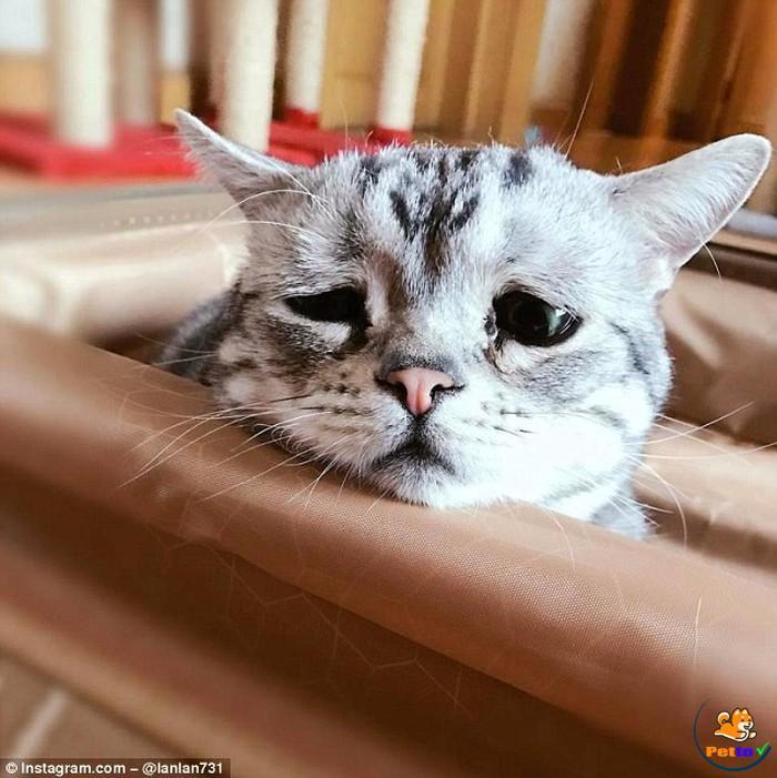 Bạn có đang căng thẳng với mèo không?
