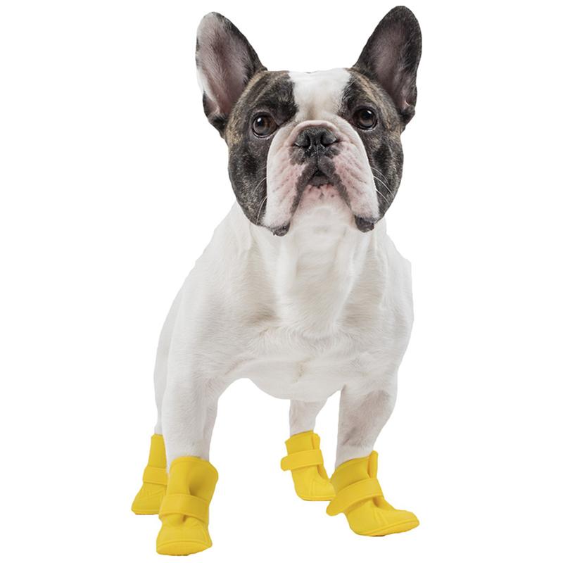 Vì sao cộng đồng thú cưng tẩy chay giày cho chó?