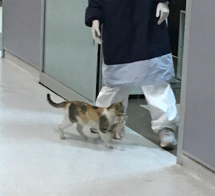 Mèo mẹ đợi cả đêm bên ngoài trạm thú y để tìm con