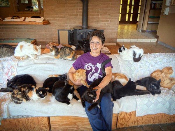 Người phụ nữ kết bạn với hơn 1000 con mèo