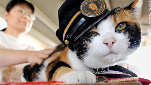 150625115430 japan station cat tama exlarge 169 2139a
