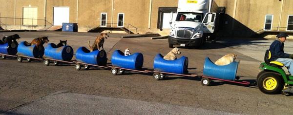 Xe lửa tự chế của ông nội dành cho chó hoang
