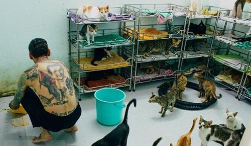 Cảm động người Pháp nhận nuôi chó mèo ở Sài Gòn