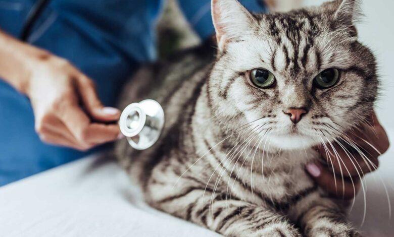 Mèo bị gãy xương - Nguyên nhân và cách chữa trị