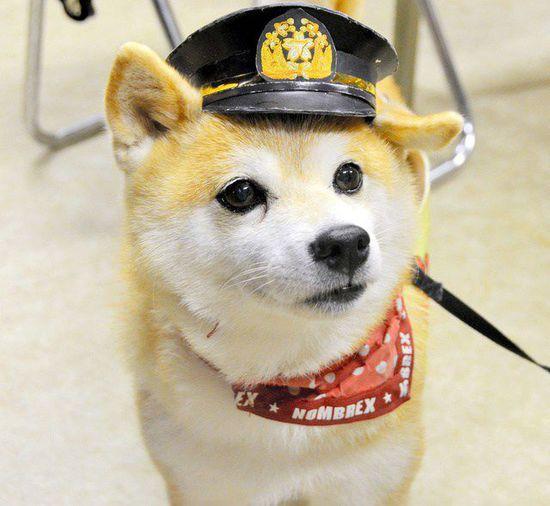 Chú chó cứu hỏa được nhiều người Nhật yêu thích