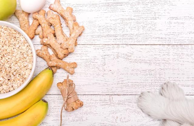 Chế độ bổ sung canxi cho chó đúng cách và hiệu quả