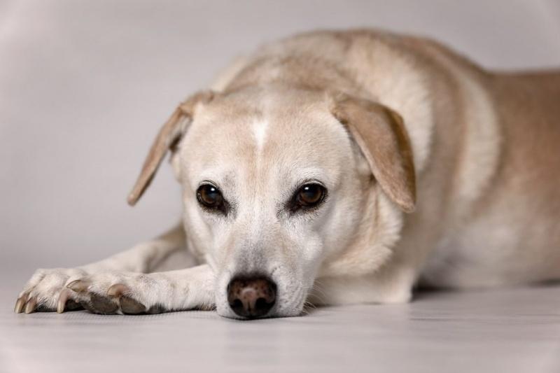 Tại sao chó không thích chia sẻ với đồng loại