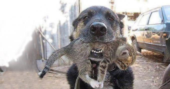 Cảm động chú chó liều mình cứu mèo con trong đám cháy