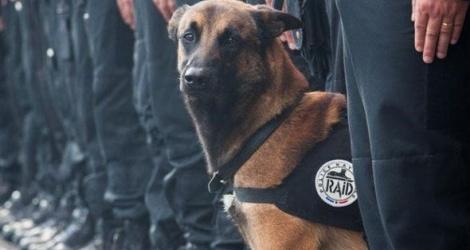 Tạm biệt chú chó truy tìm quân khủng bố ở Pháp