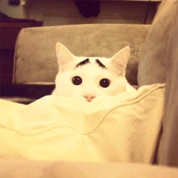 Hài hước với chú mèo có lông mày lo lắng