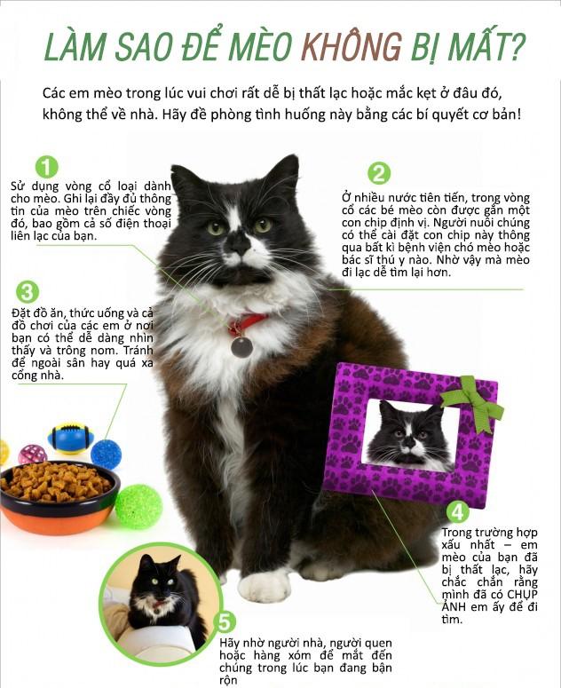 Làm thế nào Để Chó Mèo Không Bị Lạc?