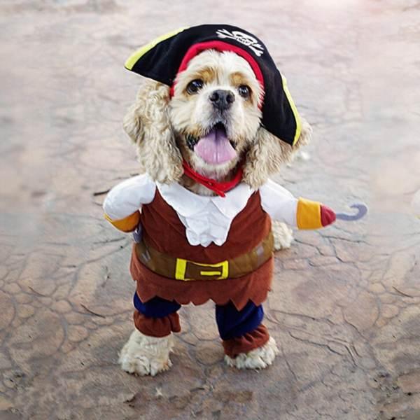Trang phục Halloween cho chó mèo