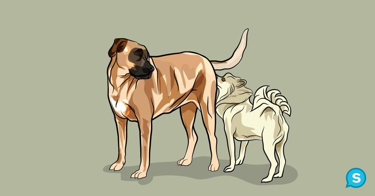 Ý nghĩa của việc ngửi mông ở chó