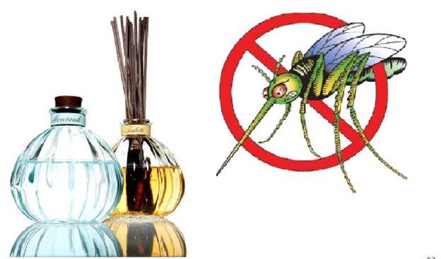 Cảnh giác với sự tấn công của muỗi đối với thú cưng của bạn