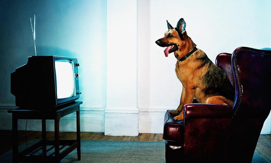 Chó có xem TV không?
