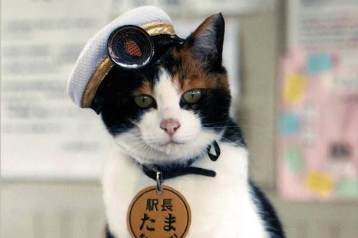 Chú mèo quản lý ga tàu ở Nhật Bản